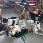 Underdog Training Dogs