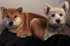 Logan & Skylar - Underdog Dog Training