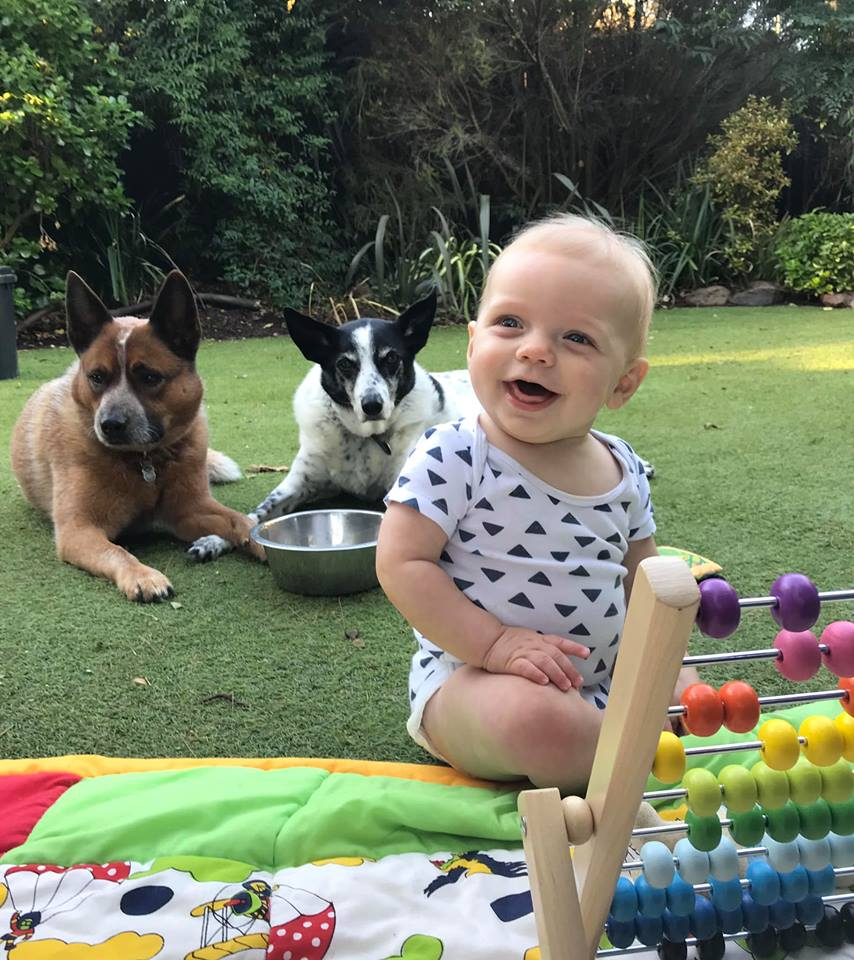 When Freddy Meets Fido - Training for Dogs & Babies